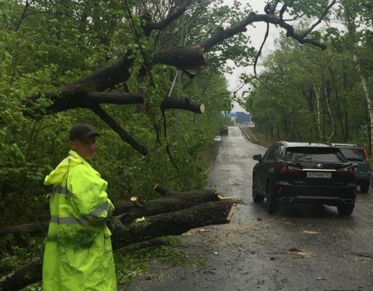 Более 20 упавших деревьев убрали во Владивостоке после разгула стихии