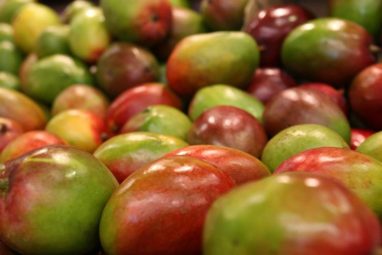 Филлипины оказались «в заложниках» у манго
