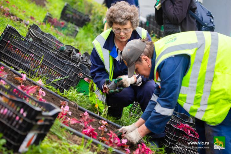 Около 6 тысяч цветов украсят клумбу «Владивосток»