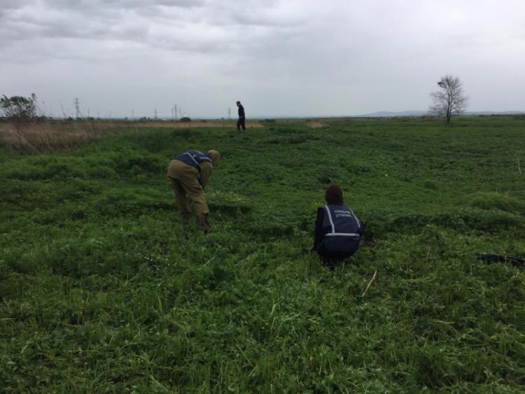 В Приморье уничтожили 250 тысяч кустов конопли