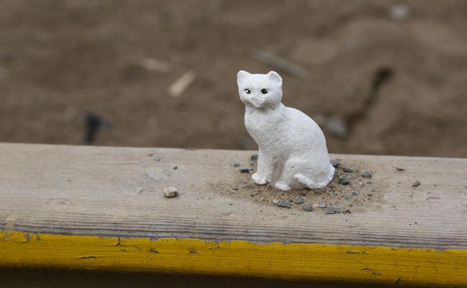 40 замурованных кошек устроили переполох в СМИ Новосибирска