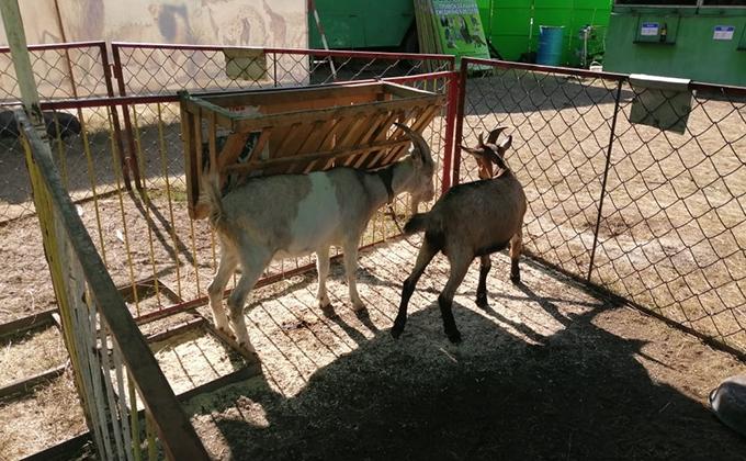 Орущие животные частного зоопарка возмутили жителей Купино и Карасука