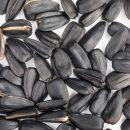 О влиянии семечек на развитие аппендицита рассказали врачи