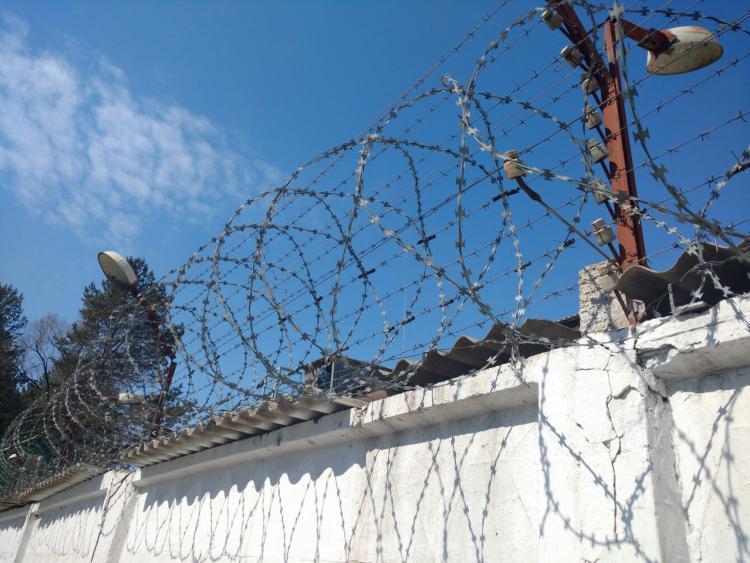 Служебные собаки нашли «запрещёнку» на территории колоний в Приморье