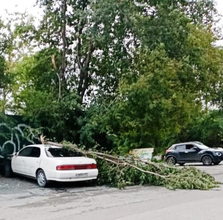 Владивостокцы рассказывают, где ураганный ветер оставил свой след