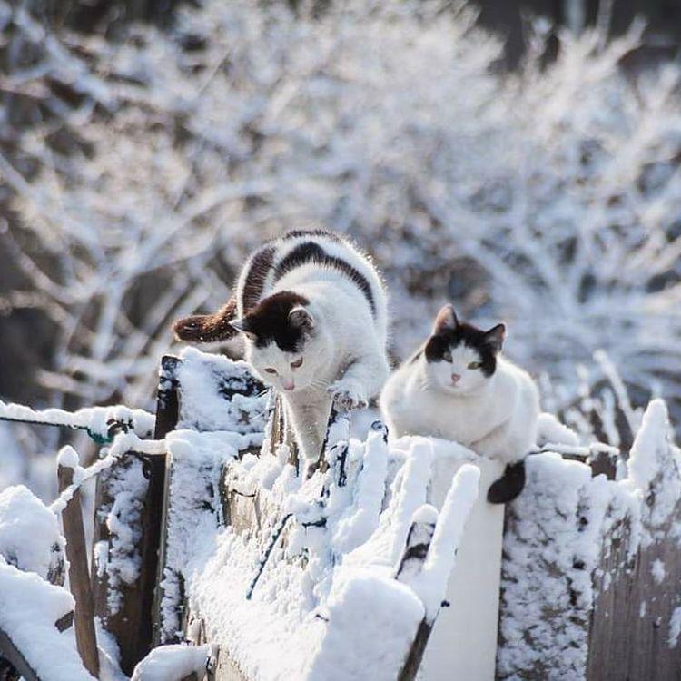 На Приморье обрушится снег с дождём