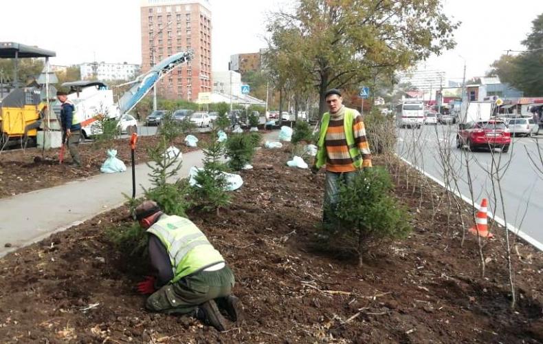 Более четырех тысяч кустарников и деревьев высадят во Владивостоке