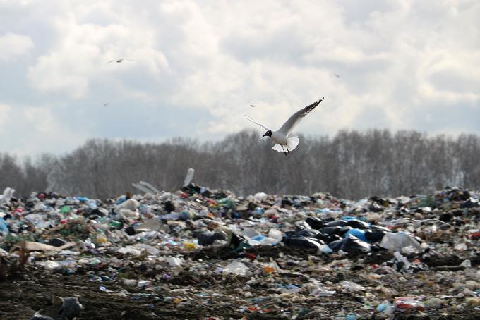 Тариф на вывоз мусора предлагают увеличить на 30%