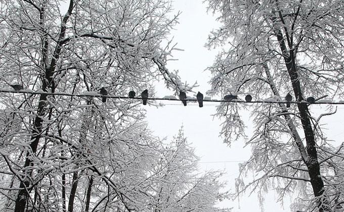 Погода 11-17 ноября в Новосибирске: снег и морозы до -20°С