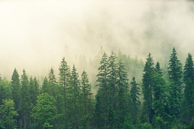 МКБ поддержал зеленое движение «ЭКА» по восстановлению и сохранению лесов