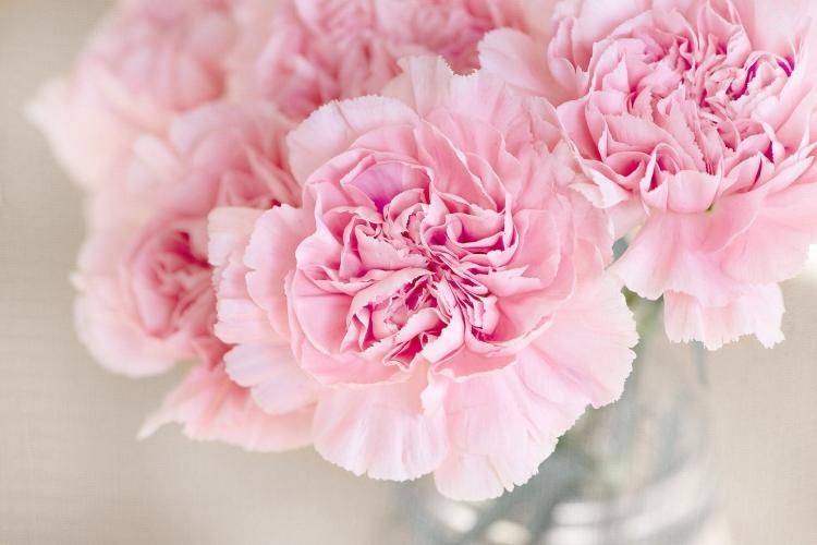 Флорист назвала цветы, угрожающие личной жизни россиян