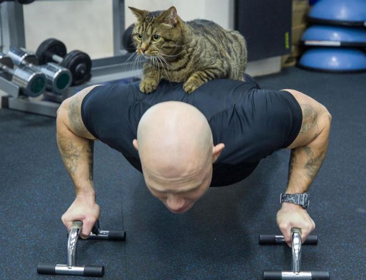 Всемирно известный кот из Владивостока решил скинуть лишние килограммы