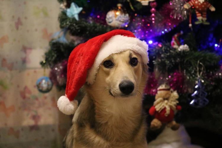 Ветеринар Владивостока: дайте успокоительное питомцам на Новый год