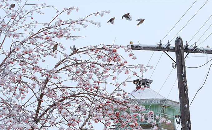 С похолодания начнется короткая рабочая неделя 9-10 января в Новосибирске