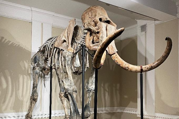 Диман или Бимбо: как назовут скелет мамонта в Новосибирске