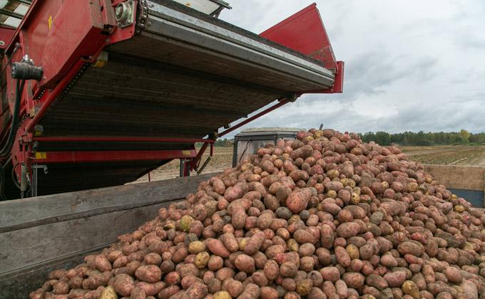 Огромный урожай картошки снизил инфляцию в Новосибирской области