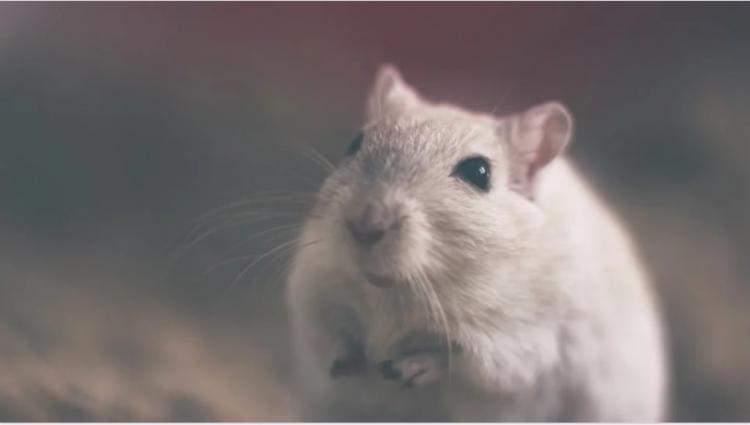 Астрологи рассказали, чем опасен 2020 год Белой Крысы