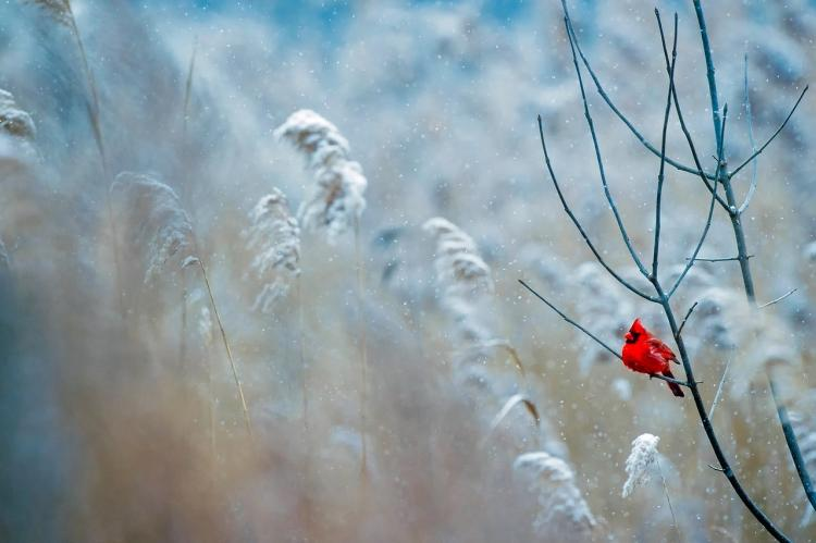 Снег и мороз ждут некоторых приморцев в выходные