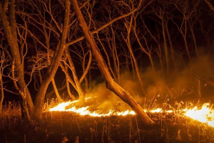 В Приморье зафиксированы два природных возгорания