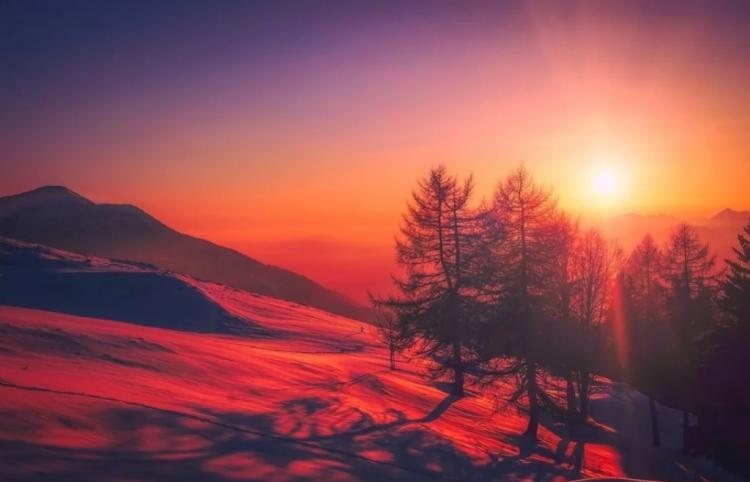 Теплые зимы грозят вымиранием ели и нашествием насекомых