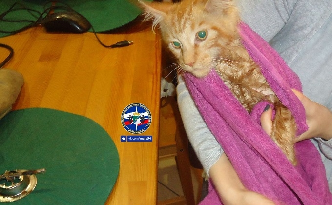 Рыжего кота освободили из мойки спасатели в Новосибирске