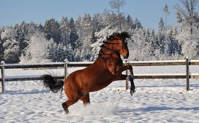 Конь повис на заборе после неудачного прыжка в Новосибирске
