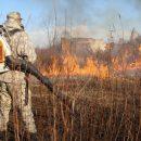 В Приморье поймали 12 поджигателей травы