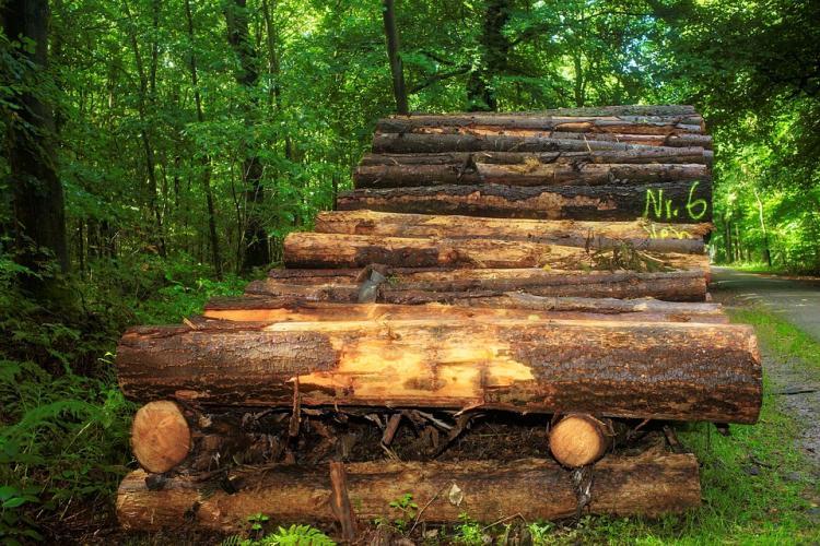 Приморская ОПГ вывезла из России лес почти на полмиллиарда рублей