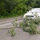 Шторм разбушевался в Новосибирске – ломает деревья и сносит велосипедистов