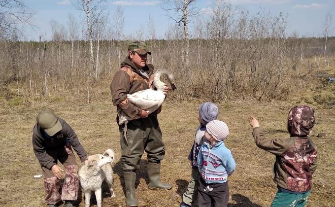 Лебедь, танцующий под Чайковского, улетел от спасителей в Кыштовке