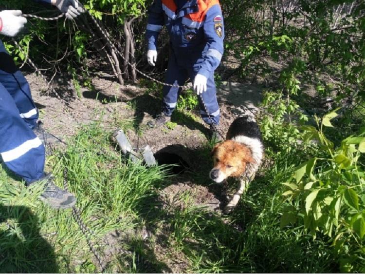 В Приморье спасли собаку, упавшую в трехметровый колодец
