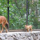 Красных волков усыновил краеведческий музей Новосибирска