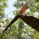 Ураган убил мужчину в Новосибирске - чиновникам вменяют уголовное дело