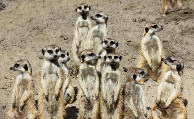 Про своих солнечных ангелов рассказали в Новосибирском зоопарке