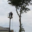 Что делать, если деревья во дворе попали под санитарную вырубку