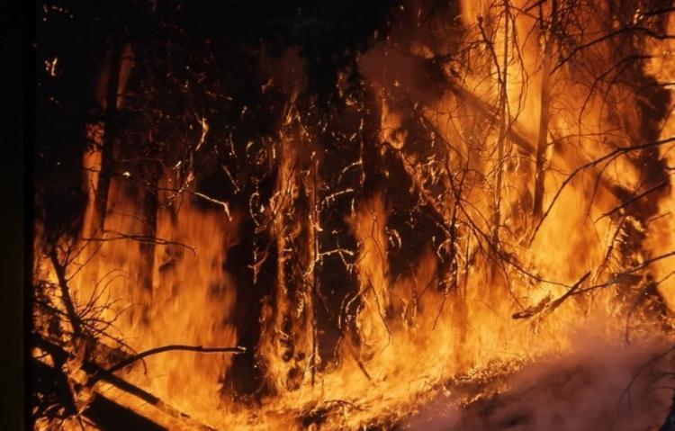 Леса в огне: В Приморье объявлено штормовое предупреждение