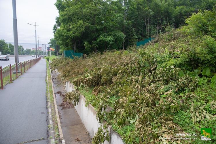 Незаконную вырубку деревьев выявили в пригороде Владивостока