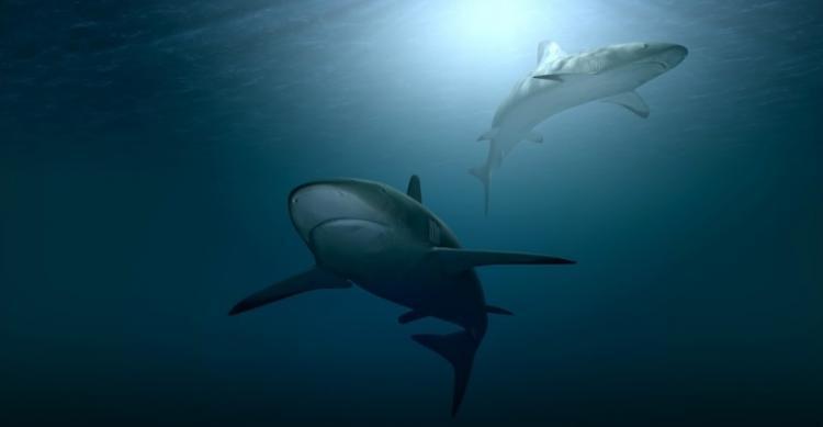 «Нужно быть осторожными»: Приморский учёный – об акулах у берегов края