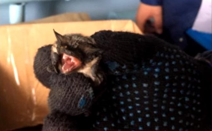 Летучая мышь напугала завхоза школы в Новосибирске