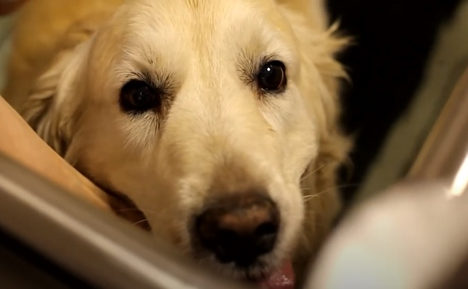 Подводным бегом лечат собак новосибирские ветеринары