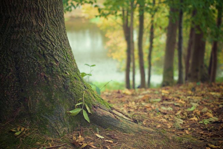 Нацпарк в Приморье возрождает исчезнувший лес у полуострова Гамова