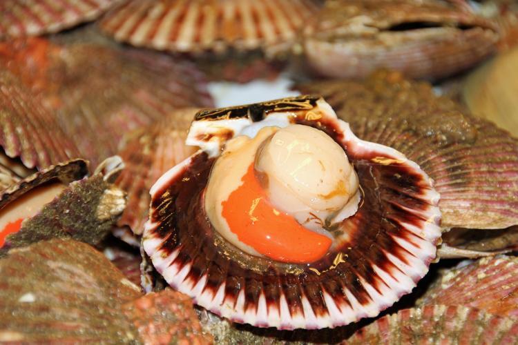 В Приморье около 700 кг гребешка вернули в море пограничники