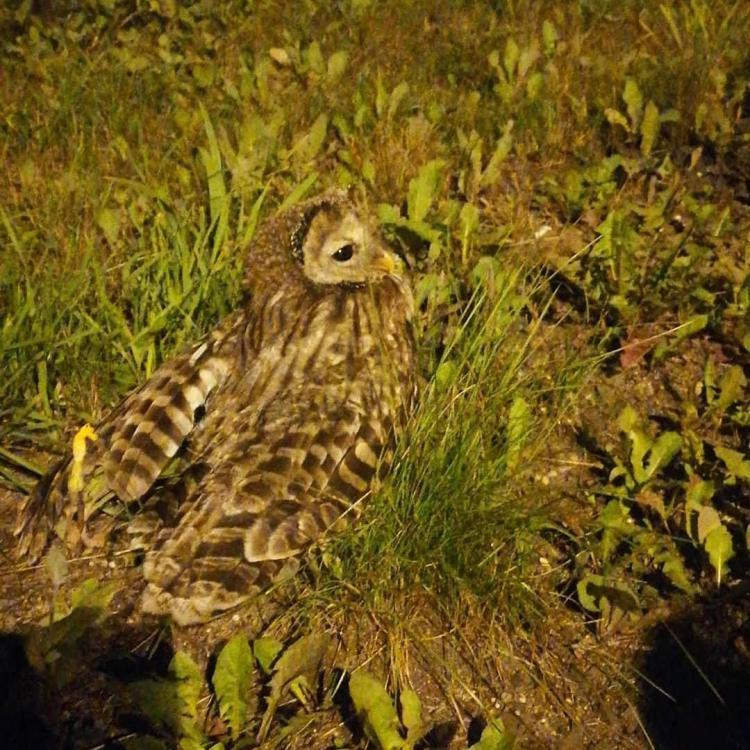 Жители Владивостока спасли от гибели сбитую хищную птицу