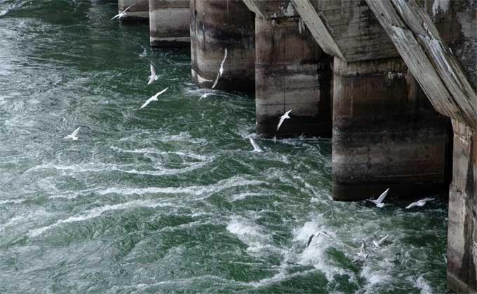 Упавшая с дамбы ГЭС Новосибирска девушка скончалась в больнице