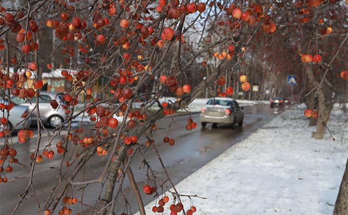 Потеплеет до +10°С в Новосибирске в начале последней недели октября