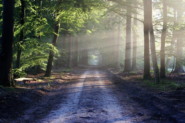 Приморцев предупреждают об опасной находке в лесу рядом с Шаморой