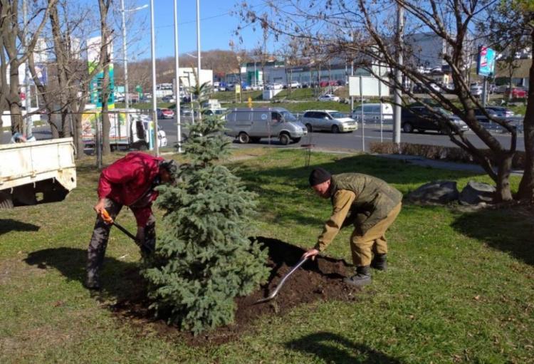 1400 деревьев и 7300 кустарников высадили на улицах Владивостока
