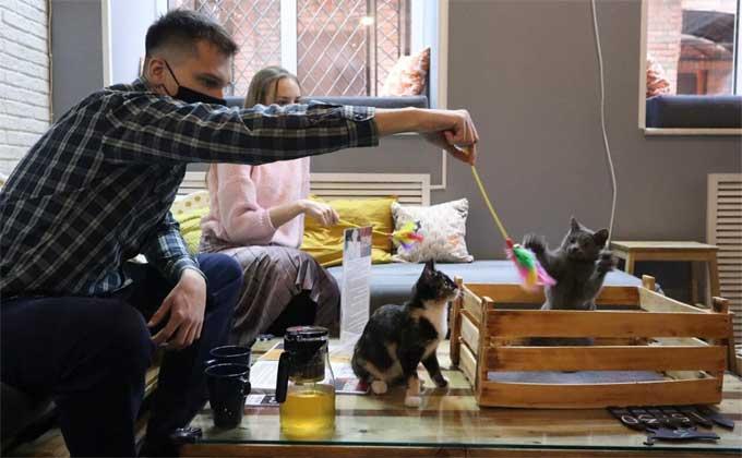 Котокафе вновь открылось после закрытия из-за коронавируса в Новосибирске