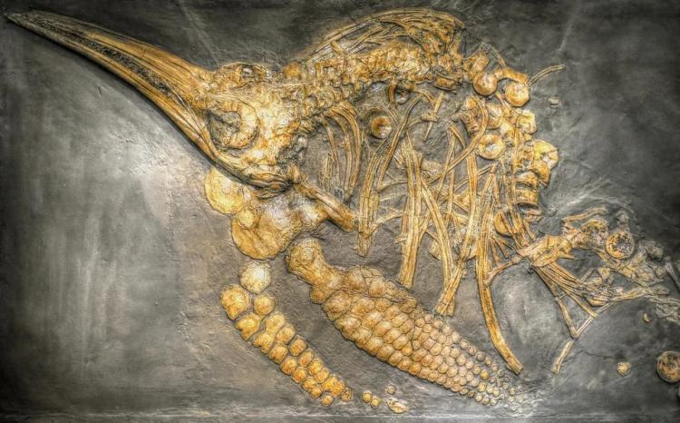 Школьник в Приморье нашёл останки ихтиозавра, жившего 247 млн лет назад