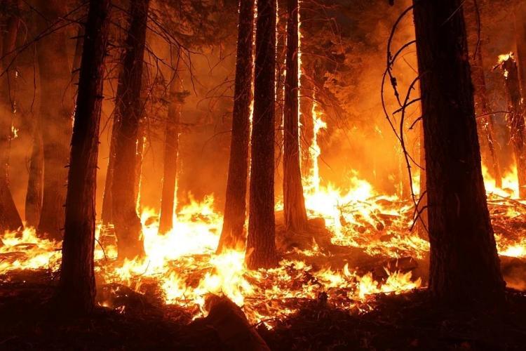 В Приморье ликвидировали несколько опасных пожаров